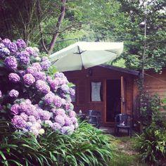 B Filosofia della quotidianità - Calice Ligure (SV) Vegetables, Plants, Cottage, Tourism, Veggies, Vegetable Recipes, Cottages, Cabin, Planters