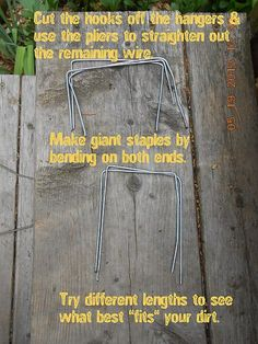 Using Wire Coat Hangers to Hold Down Garden Fabric