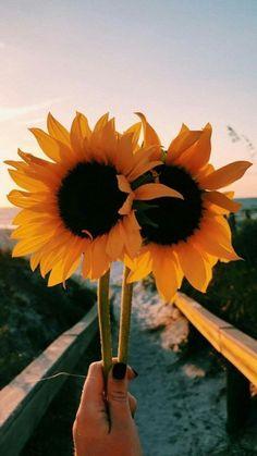 62 new ideas cute aesthetic wallpaper sunflower Cute Backgrounds, Cute Wallpapers, Wallpaper Backgrounds, Floral Wallpapers, Phone Backgrounds, Tumblr Wallpaper, Cool Wallpaper, Aesthetic Iphone Wallpaper, Aesthetic Wallpapers