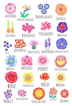 An alphabet of flowers Each watercolor illustrated flower is accompanied by hand lettered names A perfect gift for your favorite gardener your child or yourself Printed professionally on 110 lb cover paper Measures Rolled and shipped in a sturdy tube Flower Names, Flower Art, Art Floral, Watercolor Flowers, Watercolor Paintings, Acrylic Flowers, Watercolour, Alphabet Poster, Buch Design