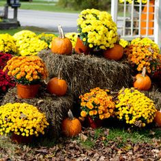 Fall Landscaping how to keep a carved pumpkin from rotting | preserve, households
