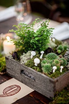 crate with succulents, moss and mushrooms