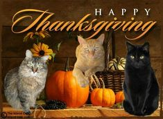 cat recipes monty the cat cats things cat base awesome cats cat and dog lost cat cat craft funny kitty cats cat tutorial Happy Thanksgiving Wallpaper, Happy Thanksgiving Images, Thanksgiving Blessings, Thanksgiving Greetings, Thanksgiving Background, Thanksgiving Quotes, Holiday Wallpaper, Fall Cats, National Cat Day