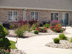 A cheerful, low maintenance garden filled with flowering shrubs.