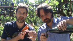 Claudio and Malcolm in the Gallucci family vineyard