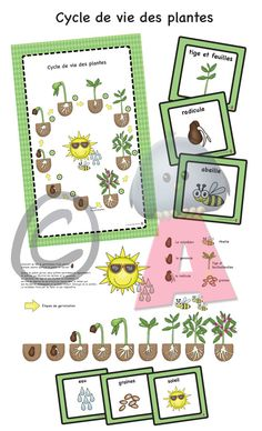 fiche et cycle de vie d'une plante Third Grade Science, Elementary Science, Science For Kids, Elementary Schools, Montessori Activities, Science Activities, Plant Science, Science Nature, Environmental Studies