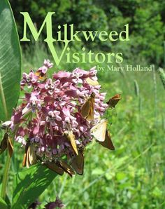 Learn about herbivores, nectivores and predators that thrive on milkweed plants through Mary Holland's beautiful photo book. Milkweed Plant, Trade Books, Monarch Butterfly, Life Cycles, Natural History, Photo Book, The Book, Bloom, Education