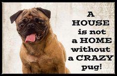 crazy pugs make a home
