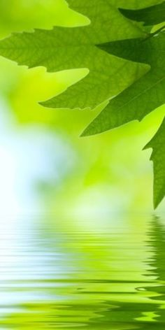 .Green, water, beautiful ~ ✿◕ ‿ ◕✿