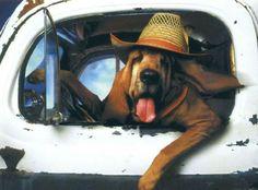Go fer a ride, go fer a ride!