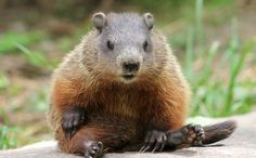 """Woman Helps Little Gopher in Trouble: Stunning """"Thank You"""""""