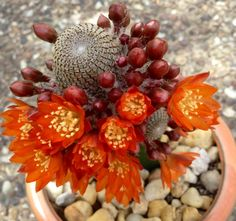Succulents∾Cacti ⨚ on Pinterest | Cactus Flower, Succulent ...
