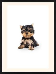 Terrier Puppy Framed Print, Black, Contemporary, White, Cream, Single piece, 24 x 36 inches