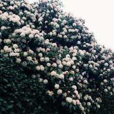 Portland spring