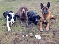 We're sure our fire #dogs' handler is DELIGHTED with his new gifts!