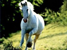 If you were born in 1942, 1954, 1966, 1978, 1990, 2002 or 2014 after February 4, your animal sign is the Horse.