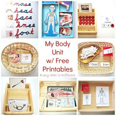 My Body Unit w/ Free Printables (Learn & Play Link Up) - Kindergarten Science Montessori, Montessori Homeschool, Montessori Classroom, Kindergarten Science, Homeschooling, Human Body Activities, Preschool Activities, Preschool Printables, Preschool Body Theme