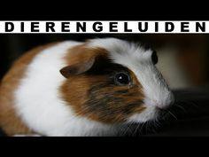 Dierengeluiden voor kinderen (Peuters, Kleuters, Dreumessen) (lang) - YouTube