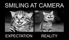 Funny pictures jokes videos and fb sayings Katzen Funny Animal Pictures, Funny Images, Funny Animals, Epic Pictures, Hilarious Photos, Random Pictures, Animal Pics, I Love Cats, Crazy Cats