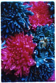 蜷川実花  ninamika.com Botanical Illustration, Illustration Art, Hair Expo, Flower Phone Wallpaper, Neon Aesthetic, Crazy Colour, Color, Unique Gardens, Elementary Art