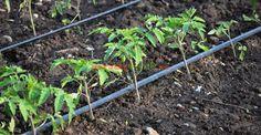 Garden Beds, Home And Garden, Short Bob Hairstyles, Outdoor Structures, Gardening, Ideas, Vegetable Garden, Garden, Agriculture