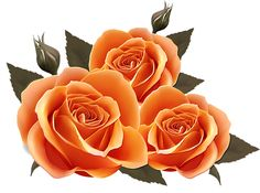Naranjas Flores Rosas Imagenes De Flores