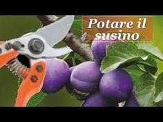Natura è Bellezza - YouTube Garden Care, Pruning Shears, Garden Tools, Youtube, Rami, Hobby, Terrazzo, Gardening, Album