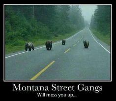Montana Street Gangs