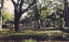 横浜のちょっと贅沢な散歩道。