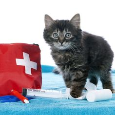 17 Essential Items for a Well-Stocked Cat First-Aid Kit