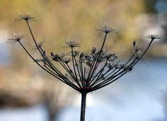 """ autumn"" by Aili A, Finland"