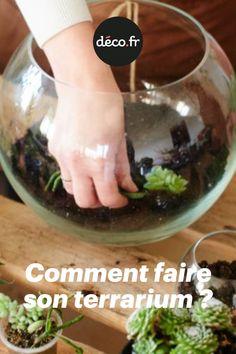 Succulents In Glass, Planting Succulents, Vivarium, Loin, Succulent Terrarium, Cactus Plants, Garden, Succulents, Plants