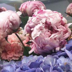 Odotusta -  ihanat pionin kukat avautumassa  once again my favorite #flower #peony  #kukat #flowerofinstagram #hydrangea #flowerlovers #instaflower #blommor #florist #flowershop #pioni #peonies #kotka #suomi #finland