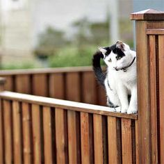 All About Wood Fences