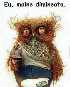 Diamond Painting Cartoon owl Full Square Rhinestones Cross Stitch DIY Diamond Embroidery Painting Wall Sticker for Home Decor Misty Day, Owl Coffee, I Love Coffee, Drink Coffee, Tj Sp, Funniest Short Jokes, Owl Wallpaper, Wallpaper Size, Animal Wallpaper
