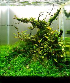 Конкурс DENNERLE Nano Cube® 2013   Все для аквариума, террариума и пруда