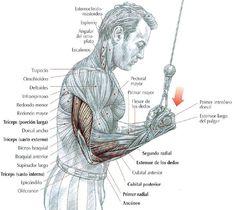 Extensiones de Triceps con agarre Invertido en Pole Alta
