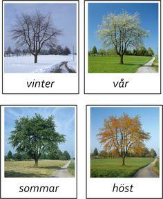 Träd i olika årstider -beställning