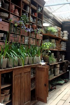 ** Potting shed