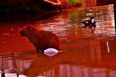 """Olhares do avesso: Menos era melhor (miniconto) – Rafael Belo """"Estar naquela água marrom era compartilhar a mesma cor. Não. Era mais que isso era um colorir mútuo. O córrego a coloria e ela coloria o córrego."""" """"Being that brown water was to share the same color. Not. Was more that it was a mutual coloring. Coloria the Stream and she coloria stream."""" #conto #menos #melhor #故事 #少 #最好的 #कहानी #कम #सबसे अच्छा #tale #less #best #cuento #mejor #сказка #менее #лучше"""