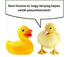 Nem hiszem el .. Funny Photos, Haha, Graffiti, Jokes, Comics, Animals, Smile, Funny Pictures, Animales
