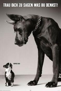 Empire 392107 Hunde - Trau dich was zu sagen - Tier-Poster schwarz-weiss Foto…
