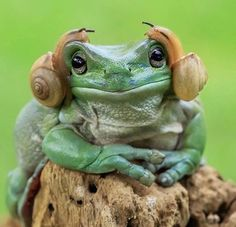 Cute and Adorable Princess Leia Frog Credit: Tanto Yansen Indonesia Nature Animals, Animals And Pets, Baby Animals, Funny Animals, Cute Animals, Wild Animals, Animals Kissing, Wildlife Nature, Funny Frogs