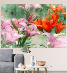 Große leuchtende Blüten, der Lilie , von ihnen gibt es rund 125 verschiedene Arten, in verschiedensten Formen und Farben.  Diese Blume ist eine Augenweide, nicht nur im Garten, auch als langlebige Schnittblume findet sie große Beliebtheit und Anerkennung.