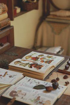 mi casita en el bosque: Colecciones Naturaleza ✿ (segunda parte)
