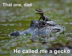 i love gators!!! cuteness overload