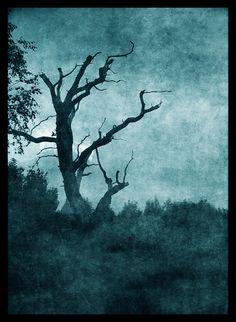 Google Image Result for http://fc04.deviantart.net/fs8/i/2005/282/8/5/Sinister_tree_by_immortal_darkness.jpg