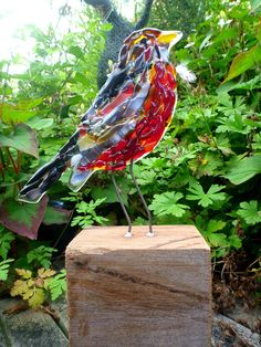 American Robin: glassfusing