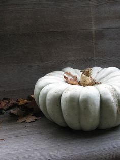 the october pumpkin sits in solitude. White Pumpkins, Fall Pumpkins, Autumn Day, Autumn Leaves, Autumn Girl, A Pumpkin, Pumkin Pie, Pumpkin Faces, Creative Decor