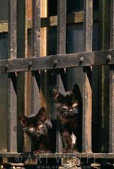 Kittens congregate at the Vatican.